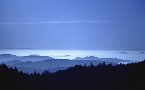 Farther south along the California Coast ranges, redwoods become restricted to moist canyons.