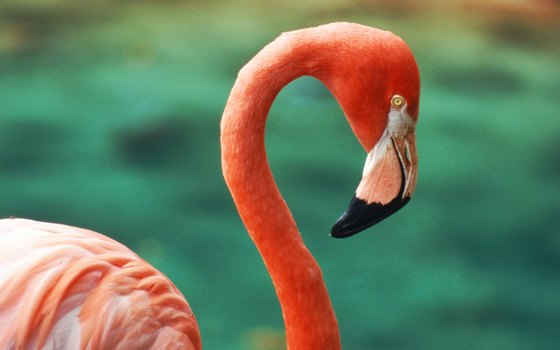 The Camargue is home to many birds, including flamingoes.