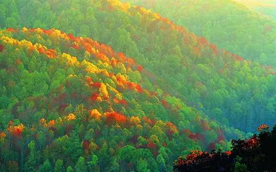 Fall foliage explodes with color in Great Smoky Mountains National Park.