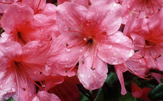 The Azalea Festival is held in Wilmington each spring.