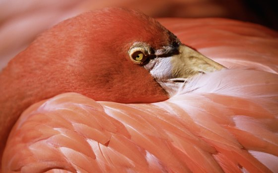 Thousands of pink flamingos nest at nearby Celestun from March to August.