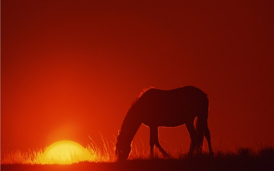 You'll love seeing the region's famous wild mustangs.