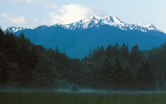 Mount Olympus soars above the forest at Olympic National Park.