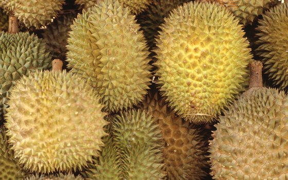 Durian fruits have spiny exteriors.