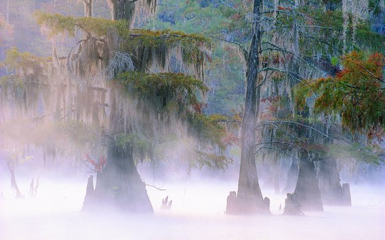 Cypress trees rise up through the mist of Caddo Lake.