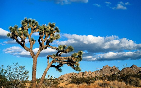 Much of California's desert lowlands offer snow-free hiking in the winter.