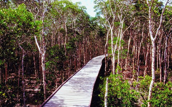 Mangrove Boardwalk in Cairns lets you explore the tropics without getting your shoes muddy.