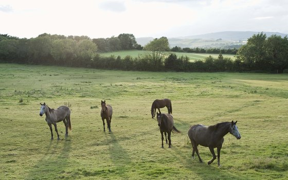 Whether or not you opt for horseback riding on your tour, you may spot horses wandering Irish pastures.