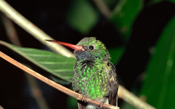 Argentina is home to many types of hummingbirds.