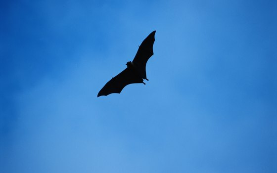 Bats fly through the upper level of the rain forest.