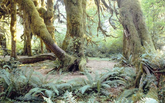 The Olympic Peninsula is home to a large temperate rain forest.