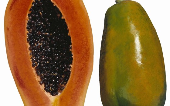 Papaya trees can grow up to 33 feet tall.