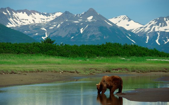 Families, especially those with lively youngsters, enjoy the adventure of Alaskan cruises.