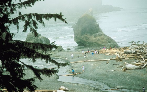 Fog shrouds the beach at Olympic National Park.