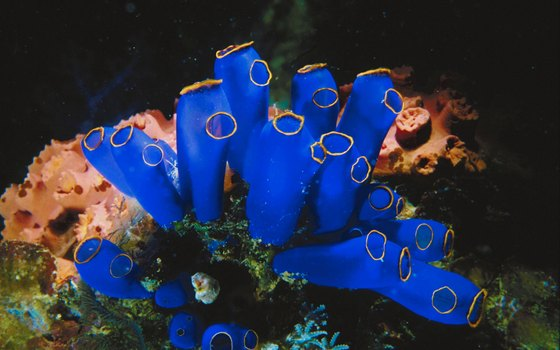 Of the world's 577 known coral species, 421 live in Philippine waters; 12 are endemic.
