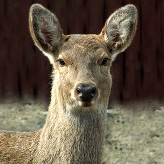 To develop a deer protein allergy, you must have close contact with deer.