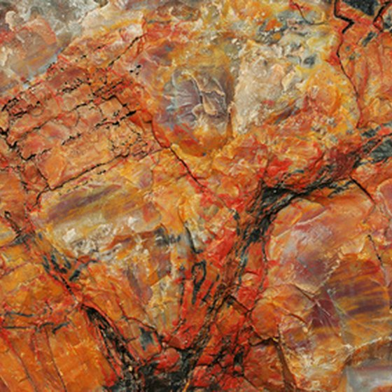 Petrified wood can be found in the Bryan/College Station area of Texas.