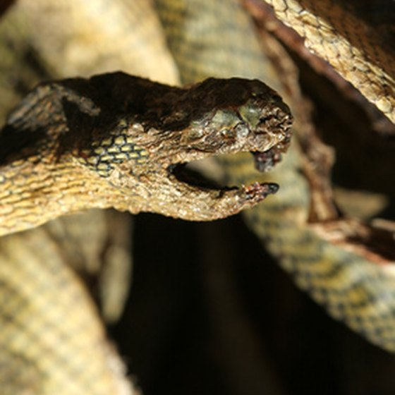 Poisonous snakes can pose significant risks around your home.