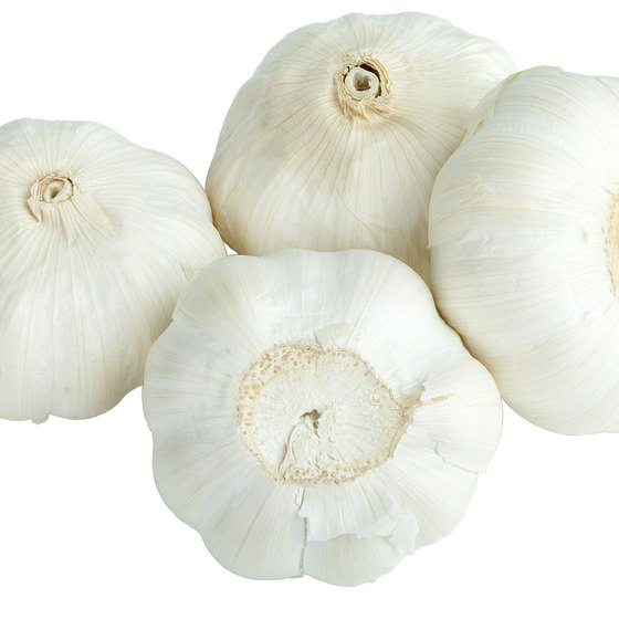 Chewing raw garlic may hold health benefits.