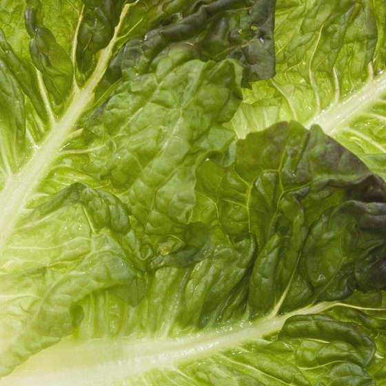 Juice lettuce to boost your vitamin A and potassium intake.
