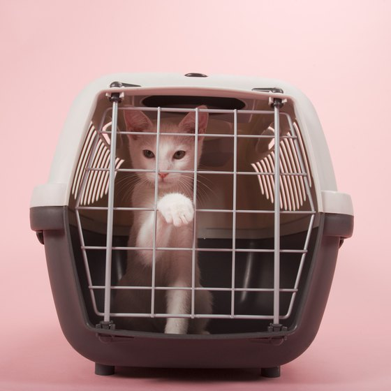 Pets in the cabin must stay in a carrier during the flight.