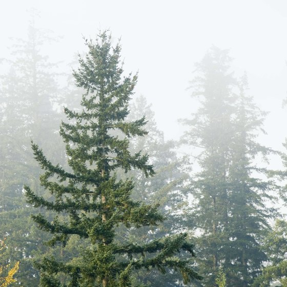 Go hiking in the misty forests surrounding Springfield.