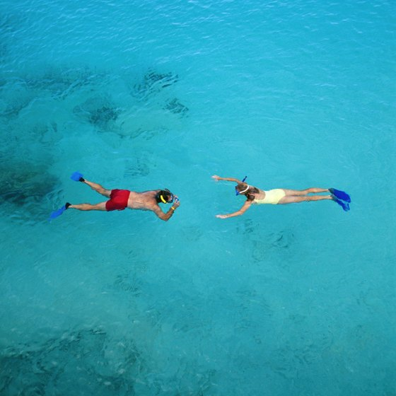 Snorkeling: a window into the marine environment surrounding Goat Island.