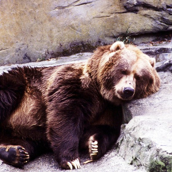 Kodiak bears are just one of the attractions on this island paradise.