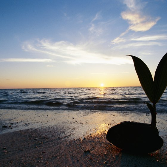 A coconut on the coast.