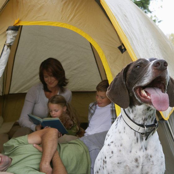 Dog Friendly Campgrounds Northern California