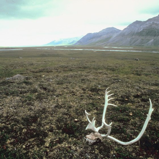 North of the Arctic Circle, landscapes tend toward the spare and the ethereal.