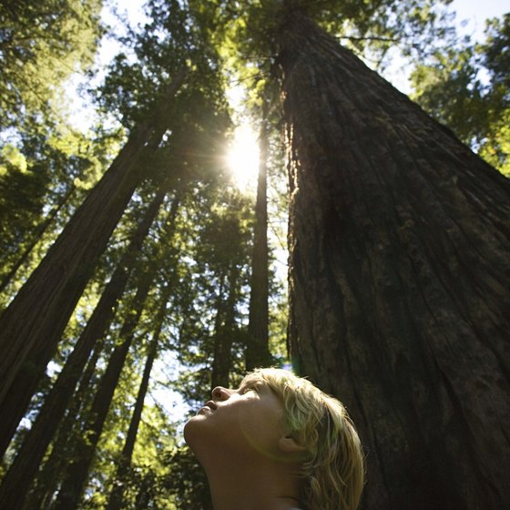 Old-growth redwoods teach and inspire us.