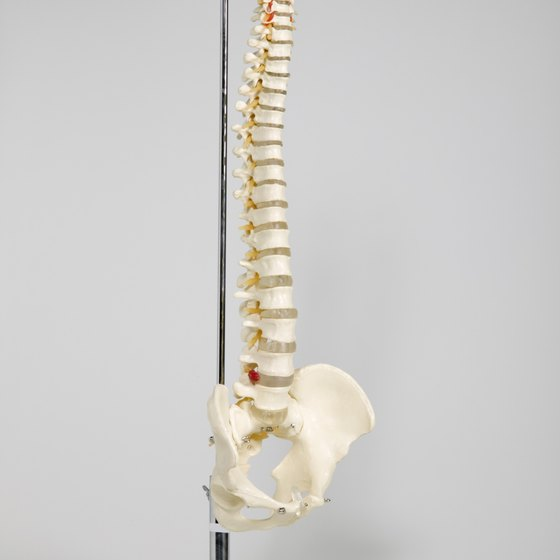You need to maintain your spine's natural curves to avoid back pain.