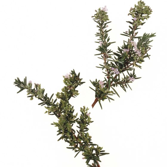 Rosemary's essential oil may stimulate your senses and thinking ability.