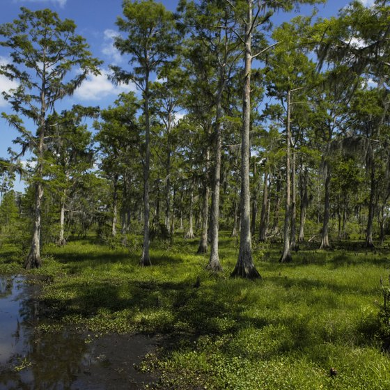 Louisiana's disappearing wetlands are a significant environmental issue.