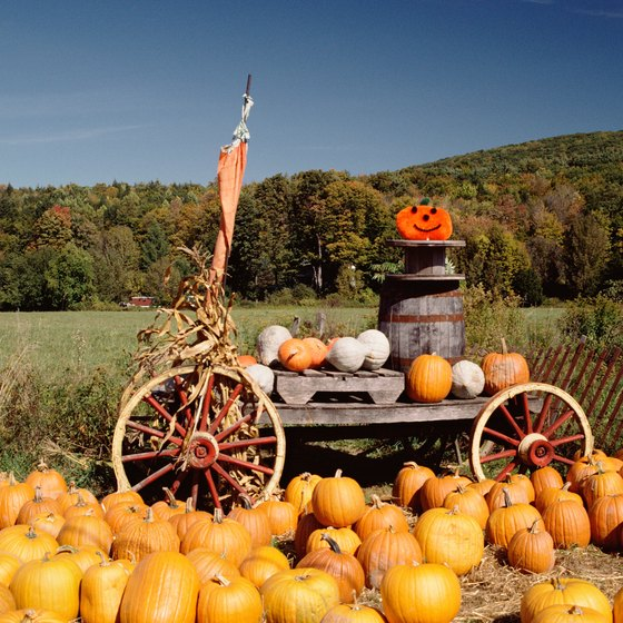 Use marketing strategies that encourage people to return every fall to get pumpkins from your farm.