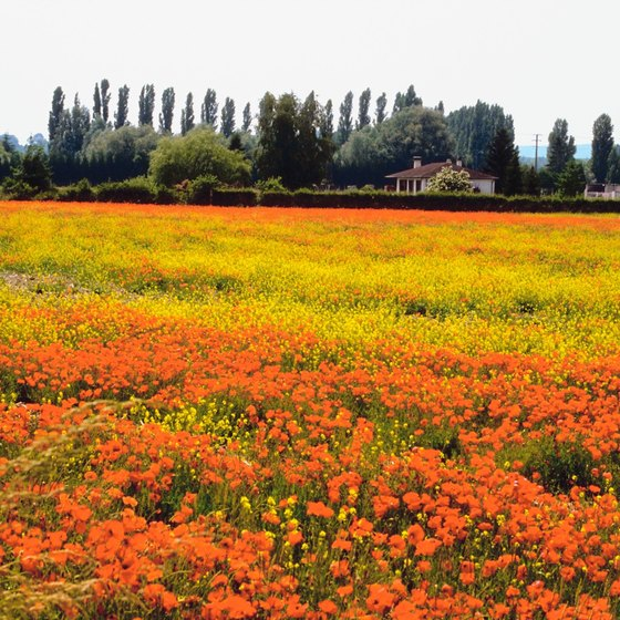 Colorful flowers dot the landscape of Reims, Champagne .