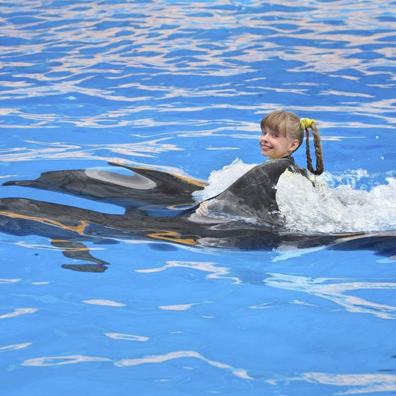 Kids as young as 6 can have the thrill of swimming with dolphins.