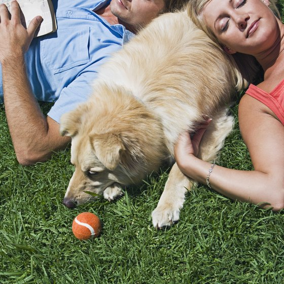Pet owners typify the concept of the traditional family.