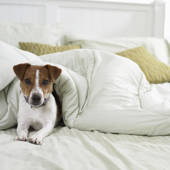 More and more bed and breakfasts today are catering to pets.