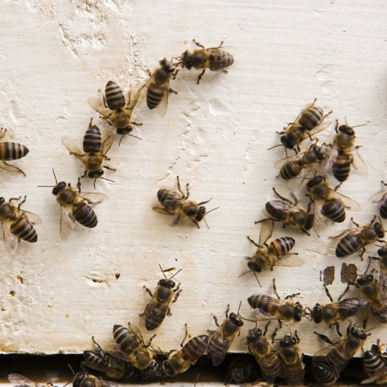 You may get stung if you disturb a group of bees.