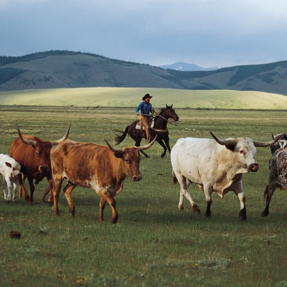 It is a misconception that losing money is a way of life in the cattle business.