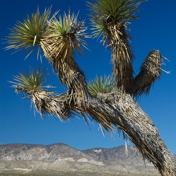 The Mojave Desert includes the famous Joshua Tree National Park.