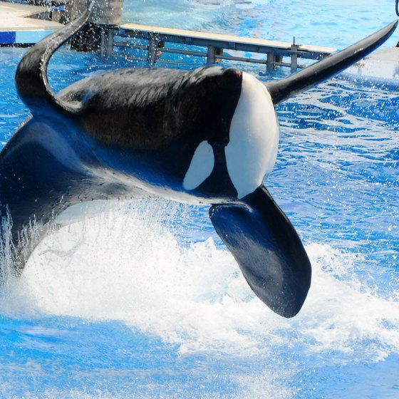 Don't miss the Shamu show at SeaWorld Orlando.