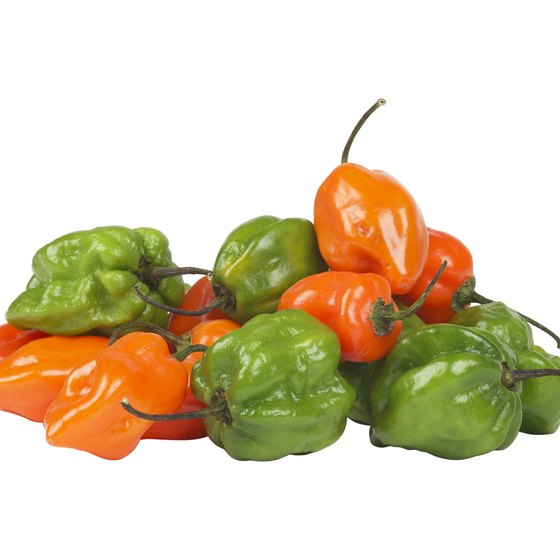 Capsaicin is an antioxidant found in habanero peppers.