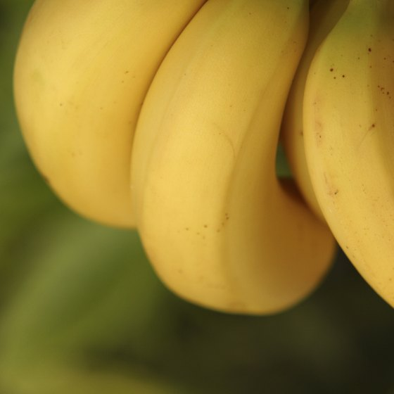 Bananas are not a rich source of zinc.