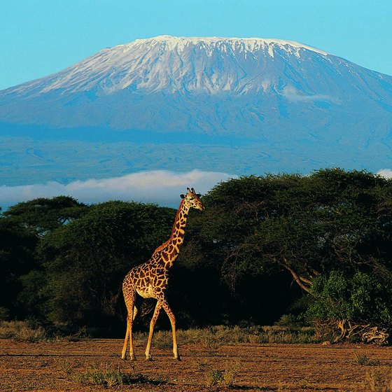 10 Amazing and Popular Tourist Attractions in Africa  Tanzania Famous Places