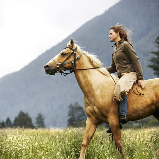 Becoming a horse exerciser is a way to earn money in the equine industry.