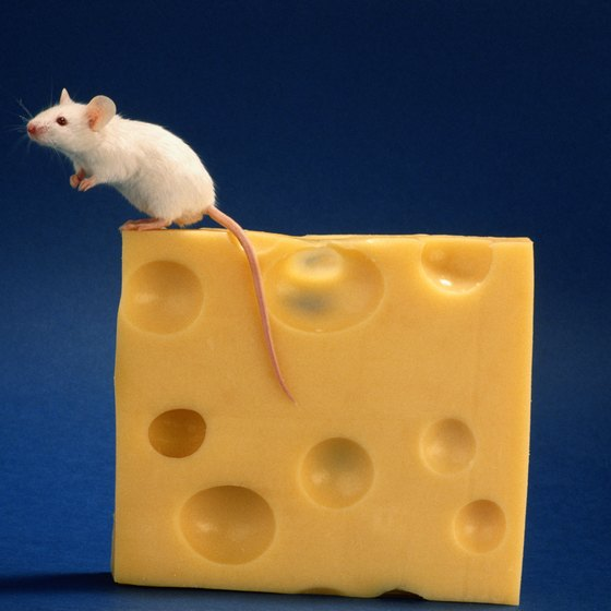 Encourage employees to go for goals like a mouse goes after cheese.