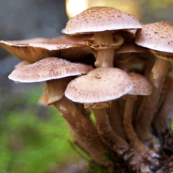 Go wild mushroom picking when you camp in the Willamette Valley.